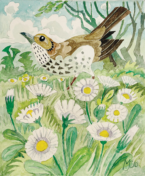 143-Daisies-and-a-Thrush
