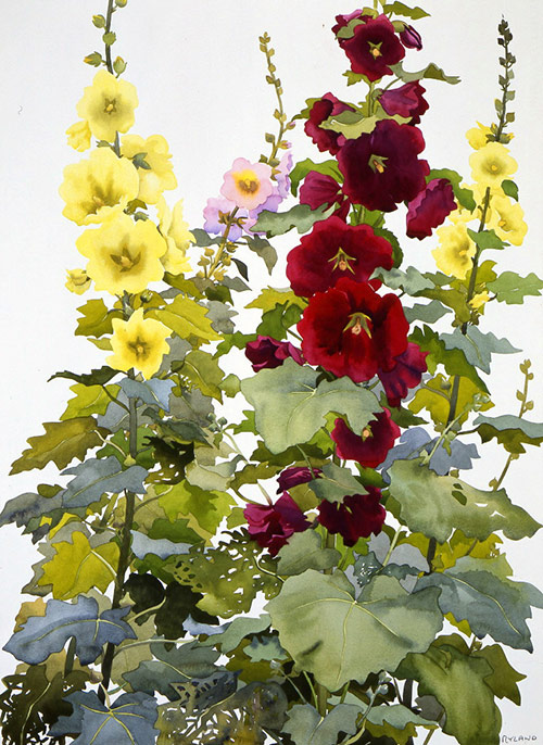 91-Hollyhocks
